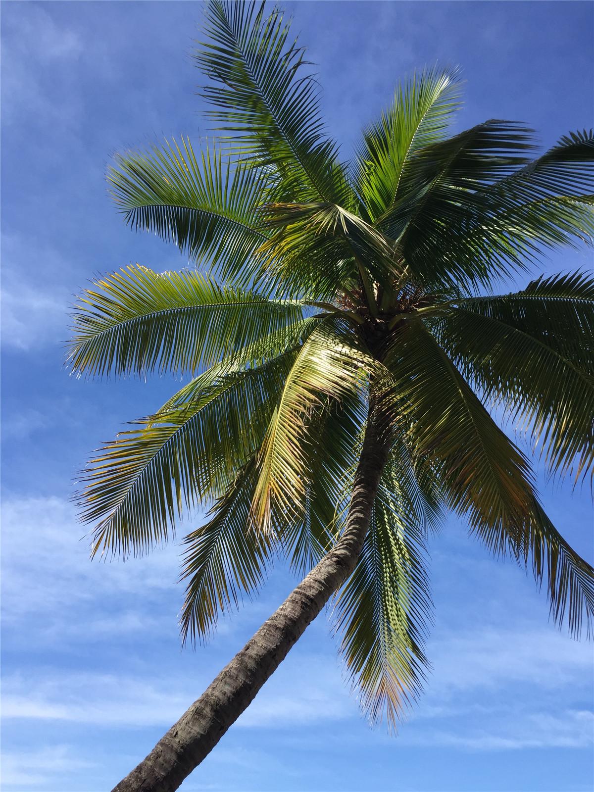 摄影:罗玉蓉+海南椰林2
